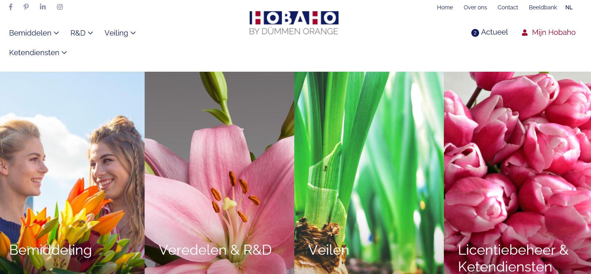 Website Hobaho vernieuwd